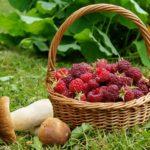 ягоды и лесные грибы